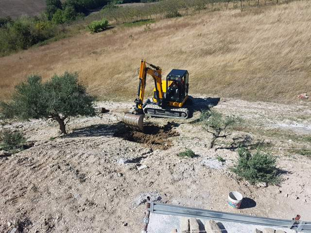 Digging to Replant an Olive