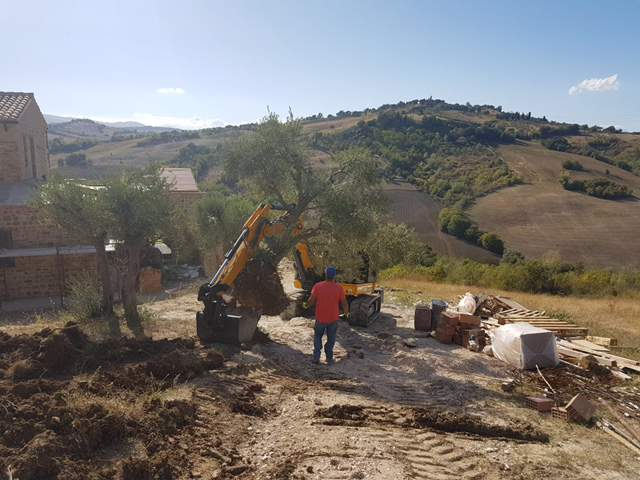 Lifting the Olive Tree