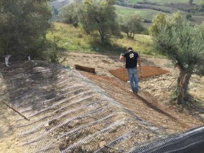 From House Level Down to Transplanted Olive at the site of new construction in Marche