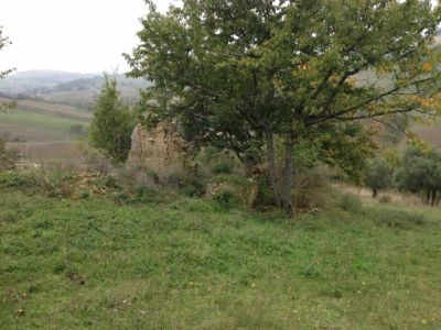 Ruin and cherry on site of new construction in Le Marche