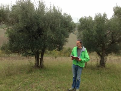 Kevin and olives on site of new construction in Le Marche