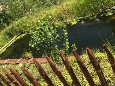 Natural Swimming Pool at Le Foglie Ridenti