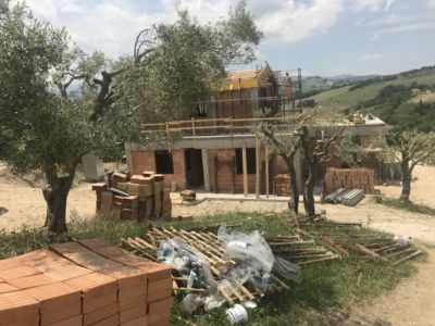 Pruned Olive Trees  at site of a new house being built in Le Marche, Italy