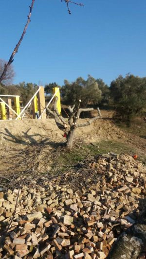 Uphill Toward Fig at new house construction site in Le Marche