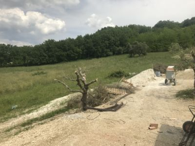 Worried about This Olive at site of a new house being built in Le Marche, Italy