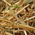 Needle in a haystack: difficulty of finding property