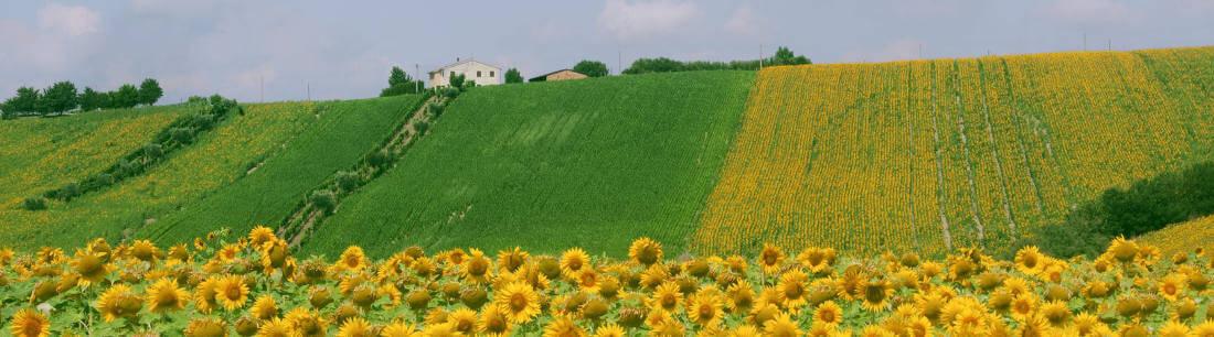 Le Marche - Hills