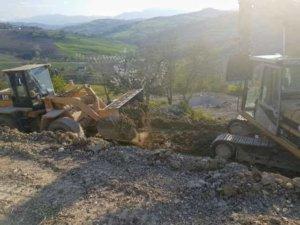 Excavation and Cherry Tree