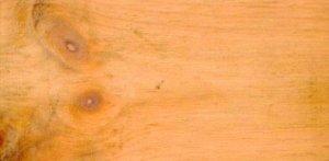 Swiss stone pine sample
